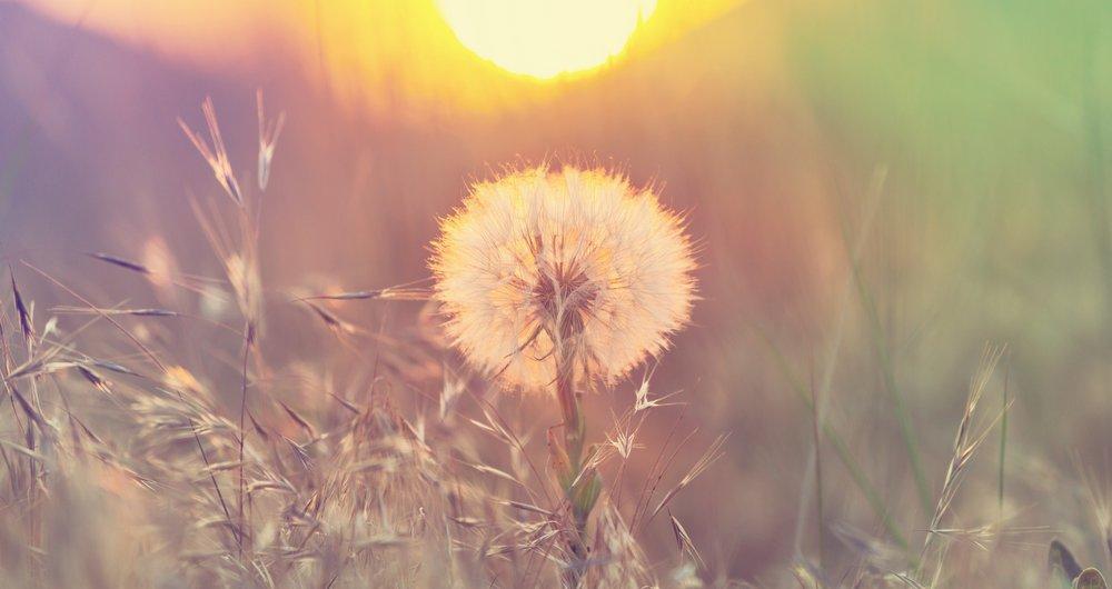 allergy relief top tips