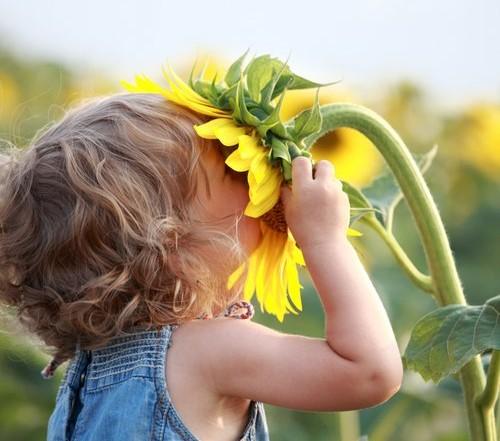 hay fever allergy relief